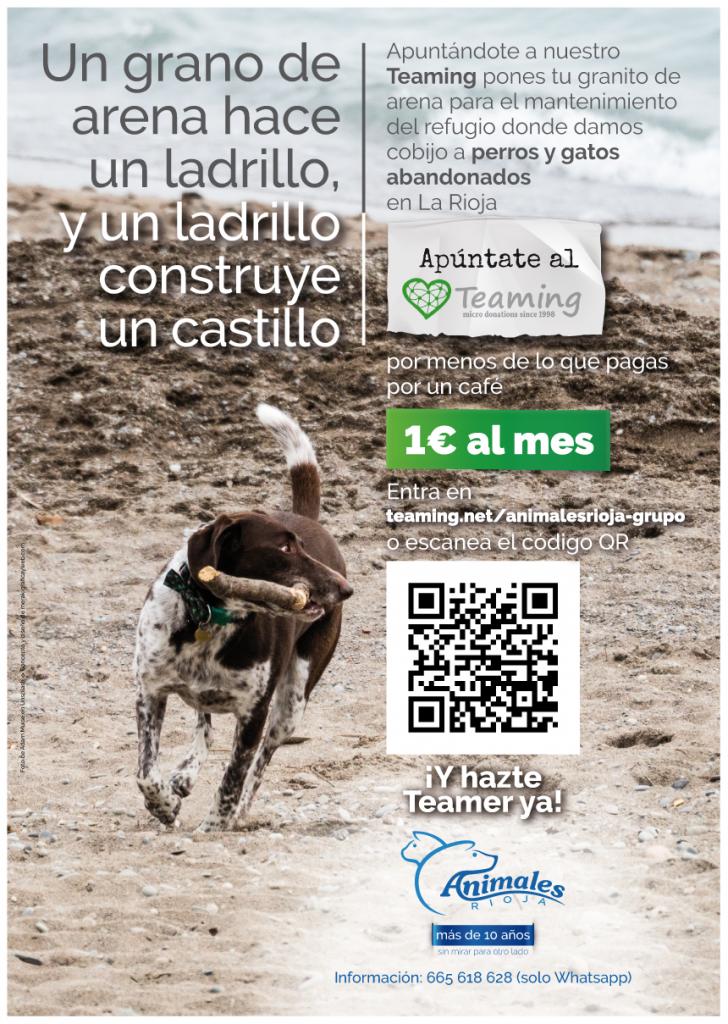"""Concepto, diseño y redacción de textos de carteles para la captación de """"Teamers"""" para la asociación Animales Rioja. Logroño, La Rioja. 2019."""